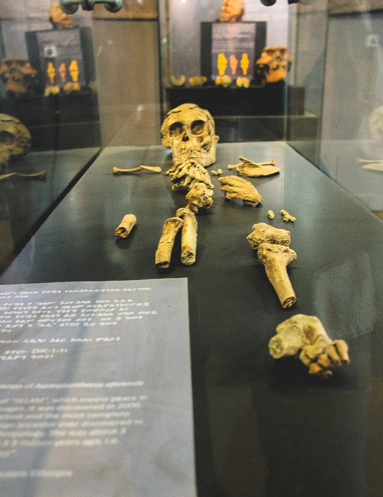 Lucy skeleton at the National Museum in Addis Ababa