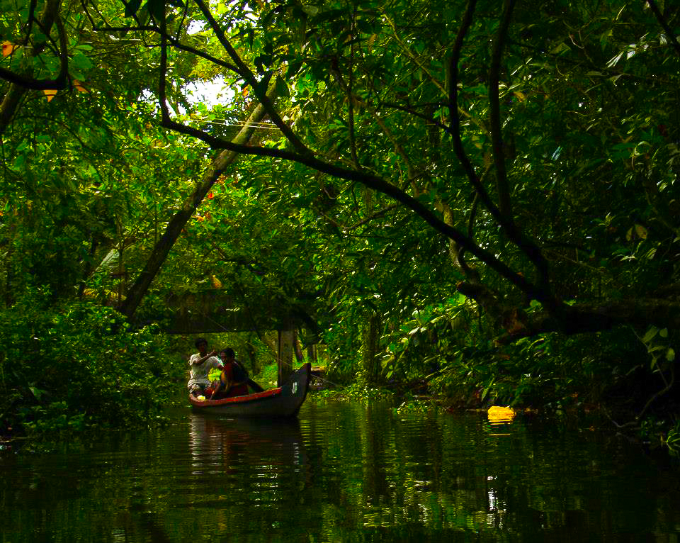 Life along the backwaters in Kollam is all about boats and palm trees