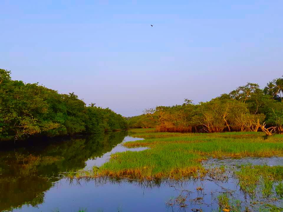 The backwater near my Kannur homestay