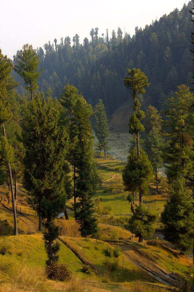 A beautiful drive from Srinagar to Yousmarg