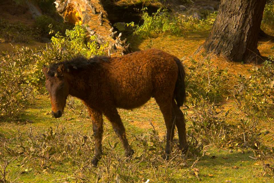 A foal in Yousmarg