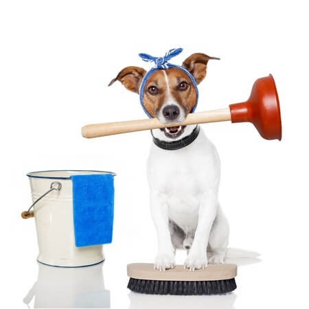 dog holding toilet plunger in mouth next to a cleaning bucket standing on scrub brush