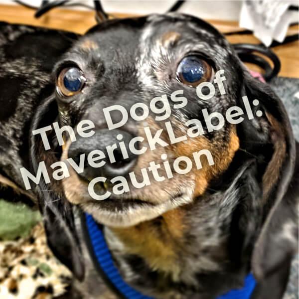 Dogs of MaverickLabel, Part 4 – Caution
