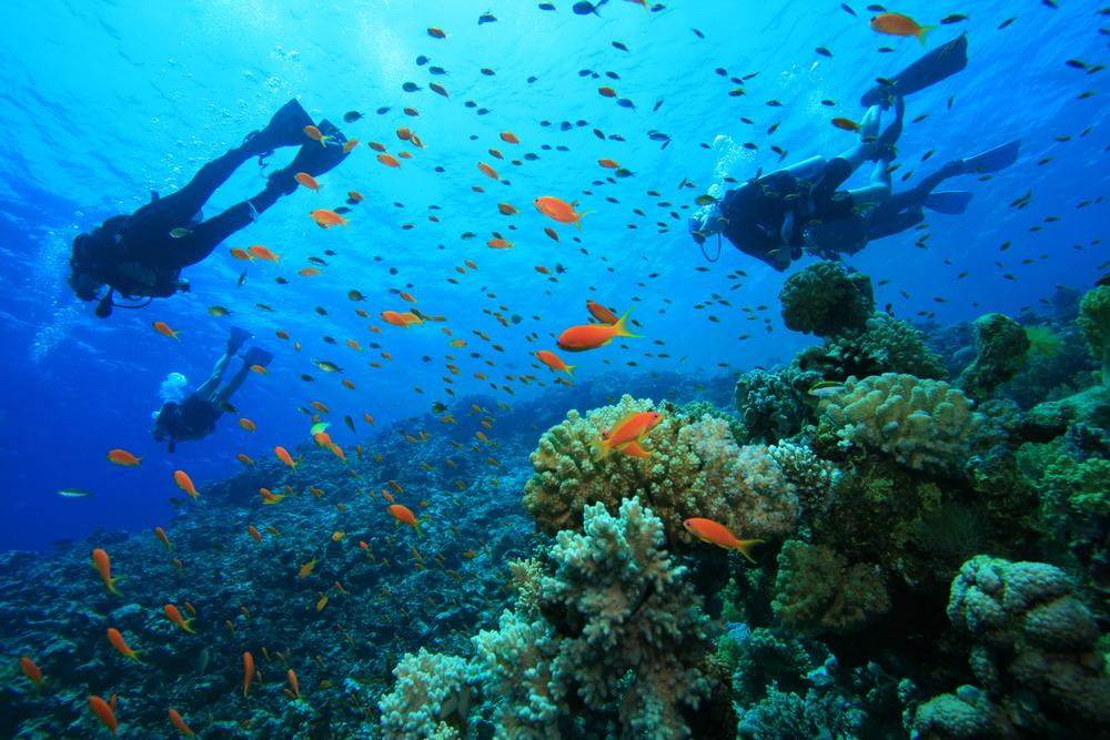 scuba diving trip