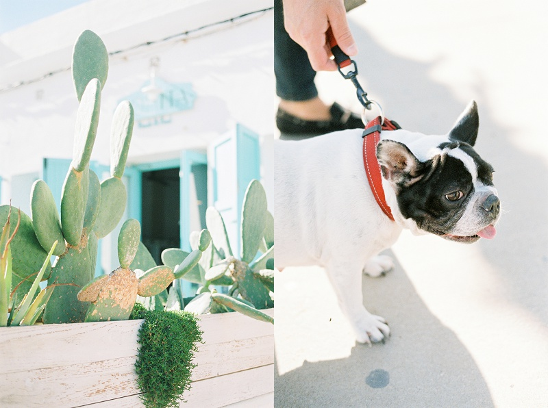 Valencia, Spain, Beach, Cactus, French Bulldog, Bohemia Gathering