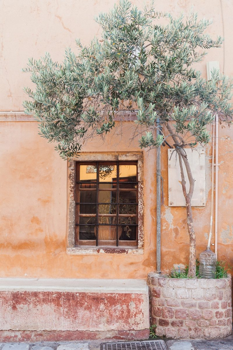Olive Tree Against a Terracotta Wall With A Window in Oai Santorini
