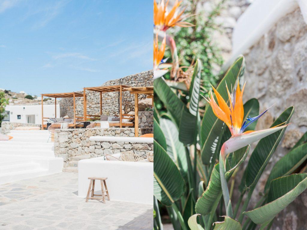 Pool area with four poster cabanas and strelitzia flowers at Artemoulas Studios Mykonos