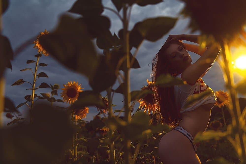 Low Light Fotoshooting im Sonnenblumenfeld