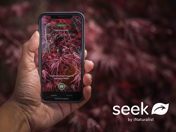 seek by inaturalist iphone ipad gratuit 1 - Seek iNaturalist iPhone - Identifier Plantes et Animaux avec l'APN (gratuit)