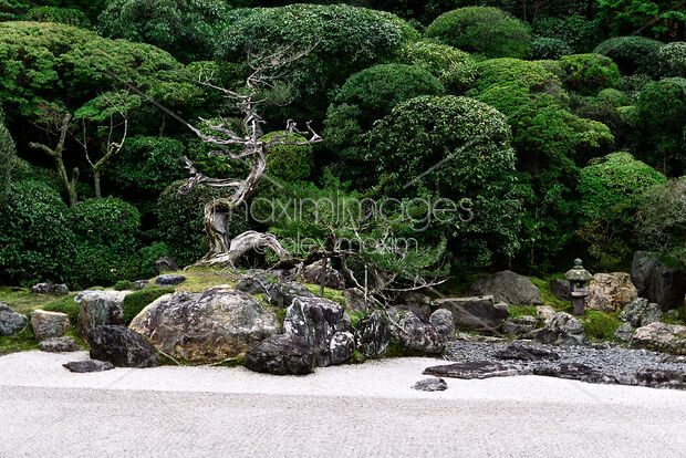 Photo Of Beautiful Dry Juniper Tree At Japanese Zen Rock Garden Of Konchi In Historic Temple In Stock Image Mxi30868