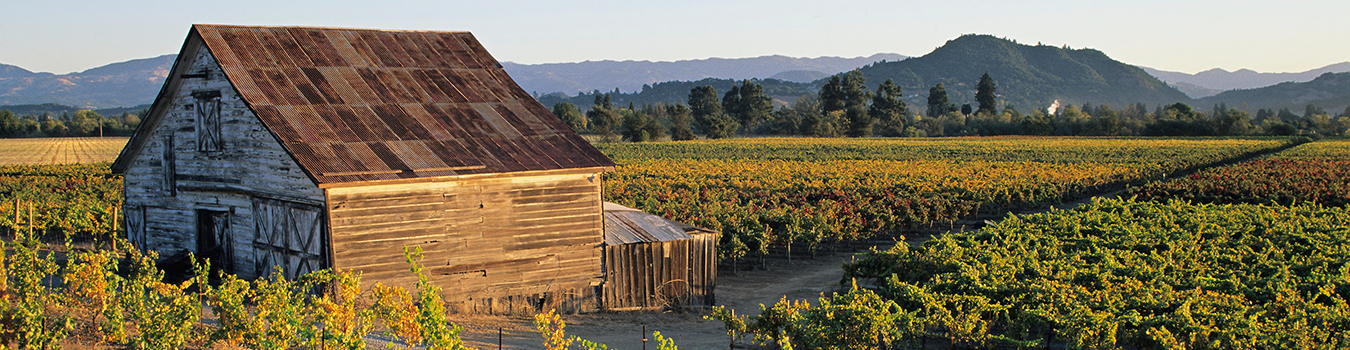 A late afternoon view of several vineyards in golden light. A tuckered out old barn stands in the foreground. Hills and a distant mountain ranges rise in the hazy background, the peaks becoming fainter in the series of range distances.