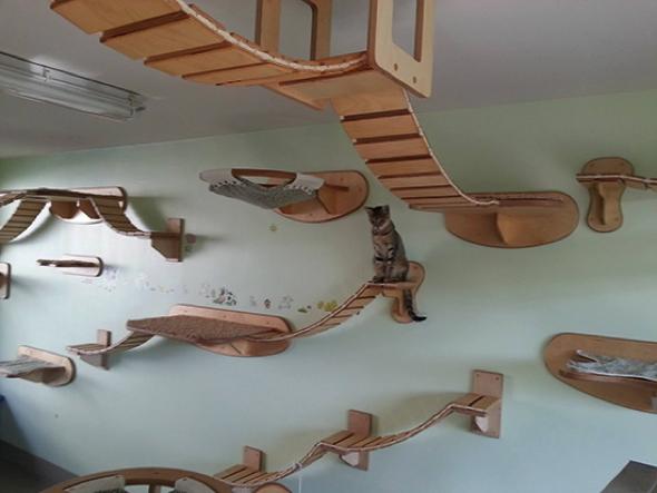 ponts suspendus et etageres pour chats