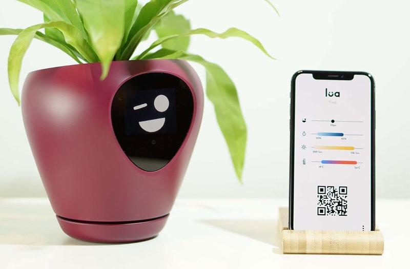 lua pot plantes fleurs connecte intelligant 04 - Lua, le Pot de Fleurs Connecté qui vous Sollicite (video)