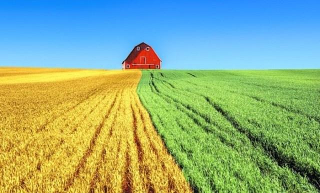 Pentingnya Manajemen Agribisnis