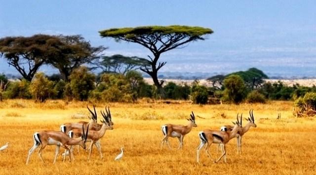 Pengertian Ekosistem Adalah Komponen Macam Macam Dan Contoh