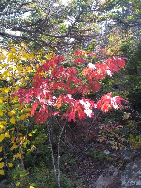 Tree with leaves turning red.