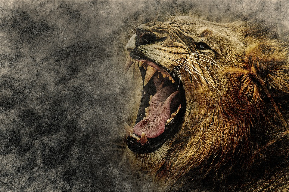 Animal Computer Wallpaper Free Photo Art Roar Design Abstract Animal Lion Vintage