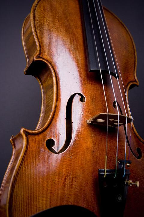 Black Rose Wallpaper Free Download Free Photo Classic Viola Cello Instrument Violin Orchestra