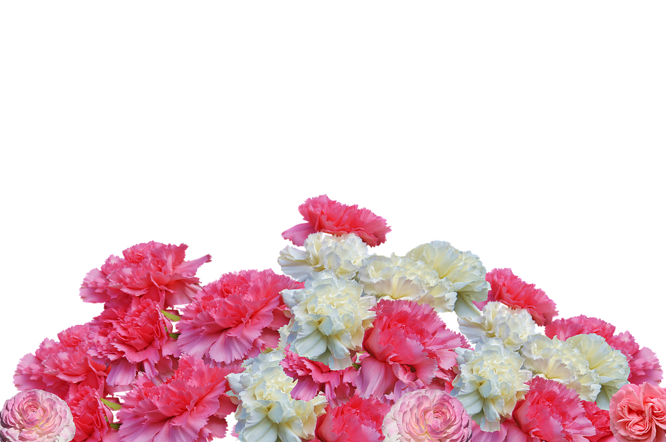 Red Flower Wallpaper Hd Free Photo Cloves Flowers Carnation Pink Blossom Bloom