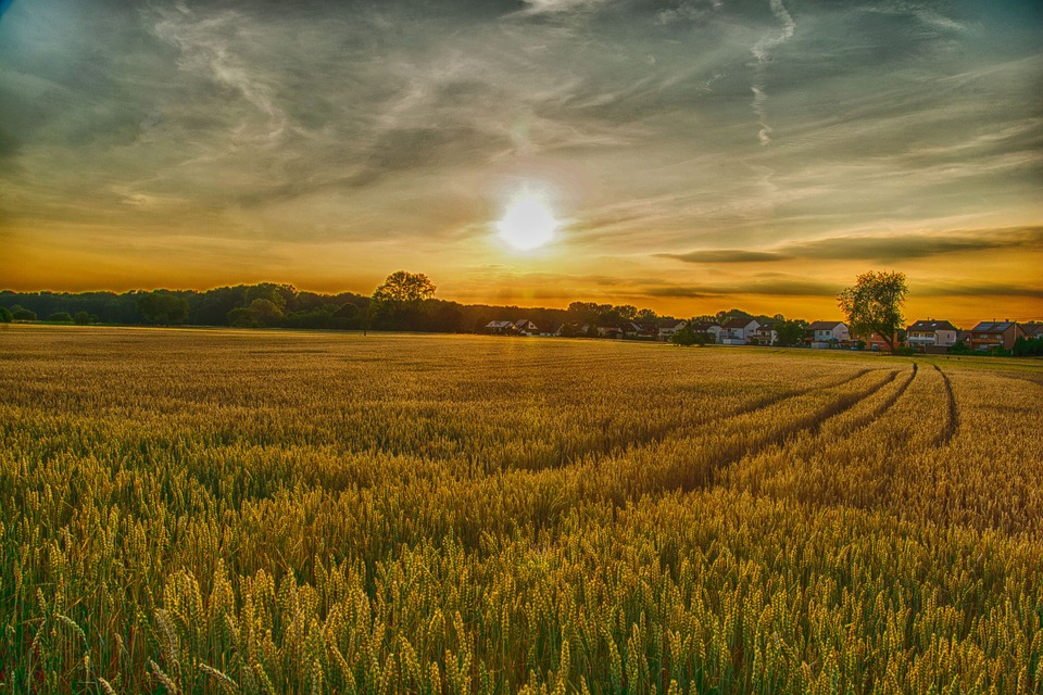 Free Fall Wallpapers Download Free Photo Field Agriculture Rural Landscape Wheat Farm