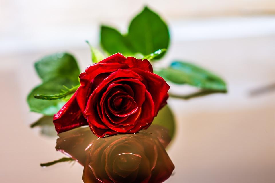 free photo flower love