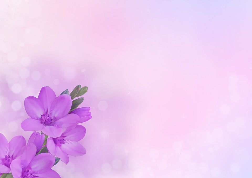 Rose Petals Falling Wallpaper Transparent Gif Free Photo Flowers Pink Purple Background Image Flower