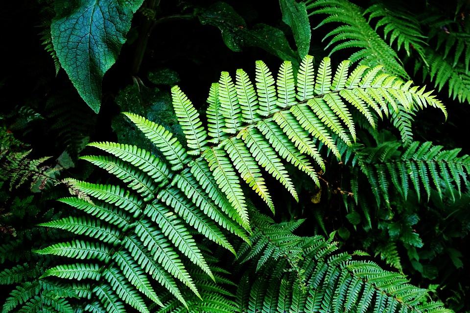 Black Music Wallpaper Hd Free Photo Foliage Verdant Forest Lush Green Nature Fern