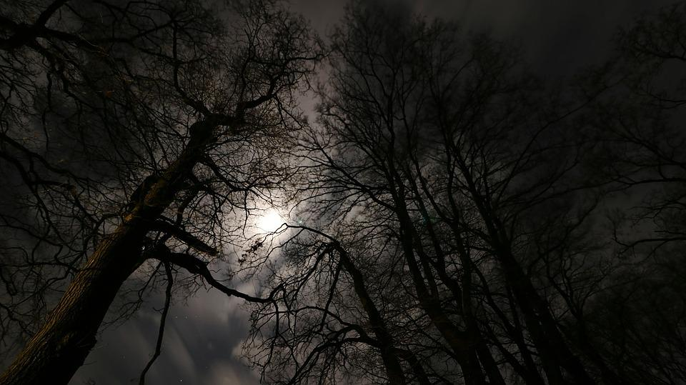 Black Music Wallpaper Hd Free Photo Forest Background Mood Full Moon Night