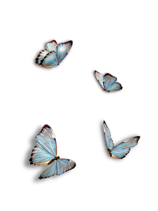Free photo Insect Isolated Butterflies Blue  Max Pixel