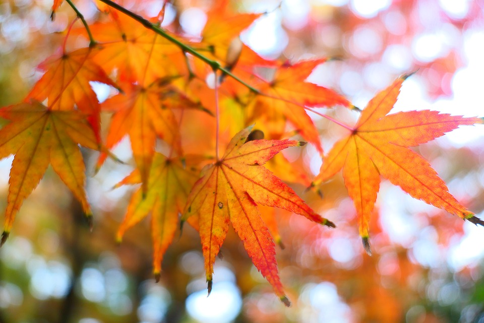 Free Fall Photos Wallpaper Free Photo Maple Fall Orange November Autumn Max Pixel