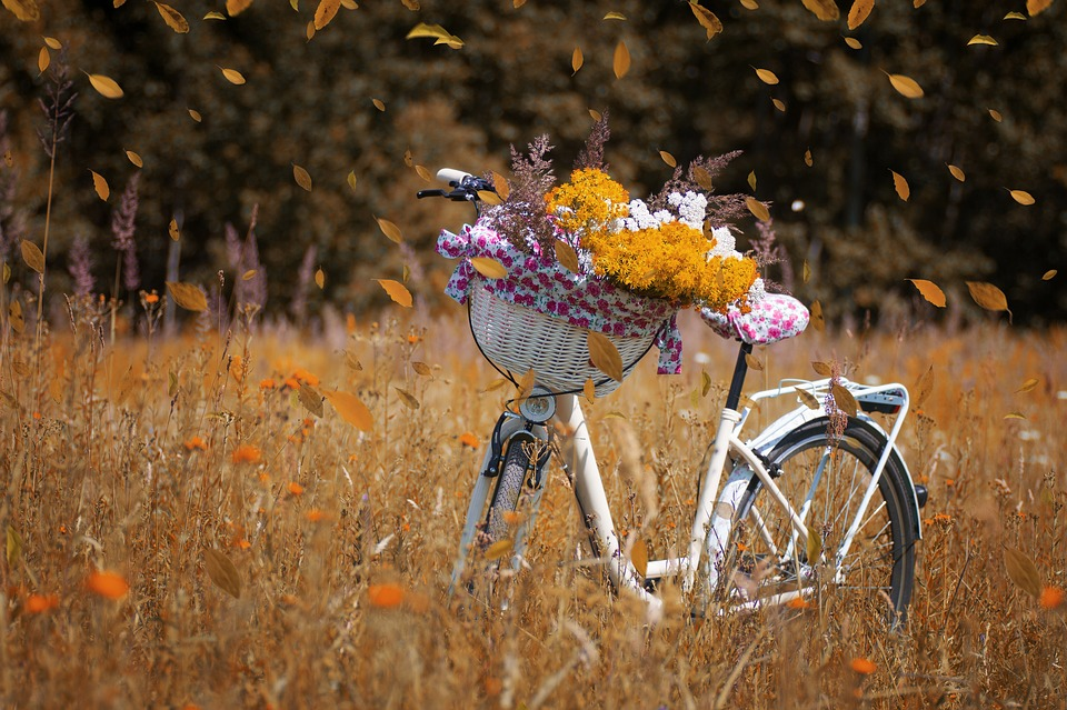 The Fall Wallpaper Free Photo Nature Bike Forest Flowers Autumn Bicycle