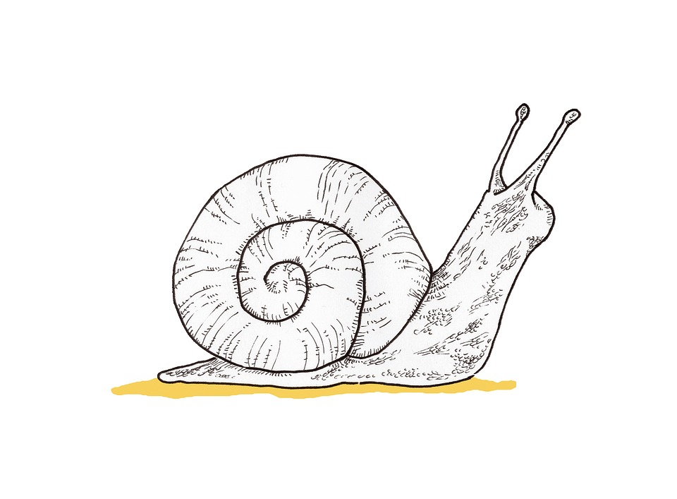 Free photo Yellow Forest Illustration Animal Snail Drawing