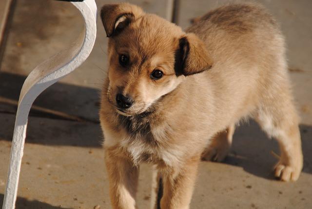 Cute Man Wallpaper Free Photo Dog Great Dane Max Pixel