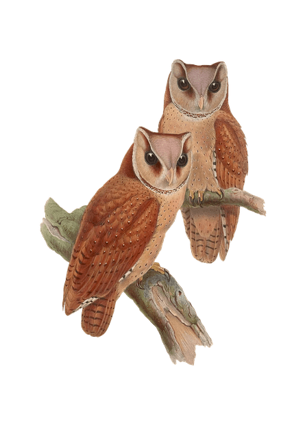 Vintage Wallpaper Animals Free Photo Vintage Animal Bird Isolated Owl Png Max Pixel
