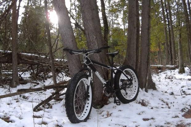 A fat bike resting against tree trunks