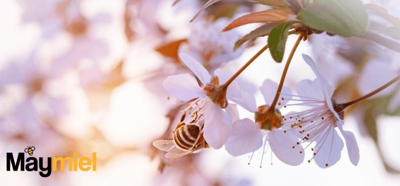 comment les abeilles fabriquent elles le miel maymiel. Black Bedroom Furniture Sets. Home Design Ideas