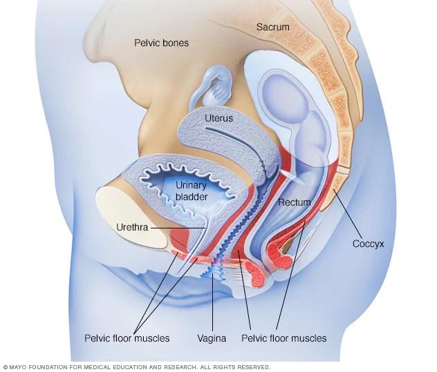 سلس البول التشخيص والعلاج Mayo Clinic مايو كلينك