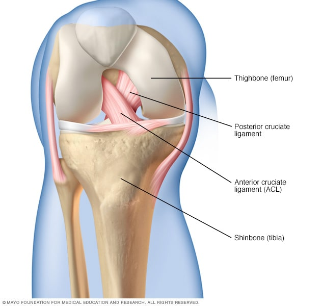 front leg ligament diagram dryer power cord wiring posterior cruciate pcl injury symptoms and causes ligaments in the knee