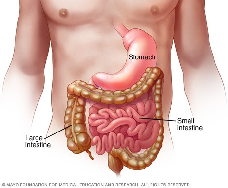 Viral gastroenteritis (stomach flu) - Symptoms and causes - Mayo ...