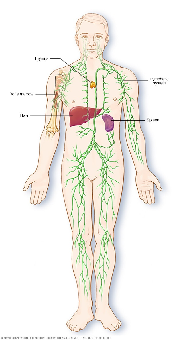 where are my lymph nodes diagram vl ignition wiring swollen symptoms and causes mayo clinic lymphatic system