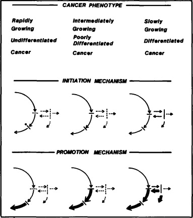 Mechanisms for the Initiation and Promotion of