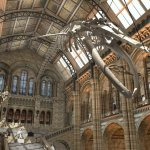 Win a preview of the Natural History Museum's iconic Hintze Hall