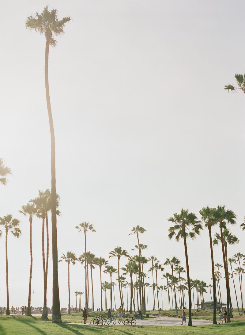 tall trees!
