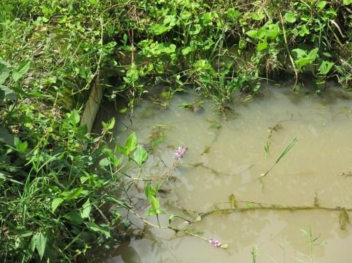 M'bale Uganda Mikveh