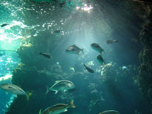 An underwater shot from the Musee Oceanographique, Monte Carlo, Monaco