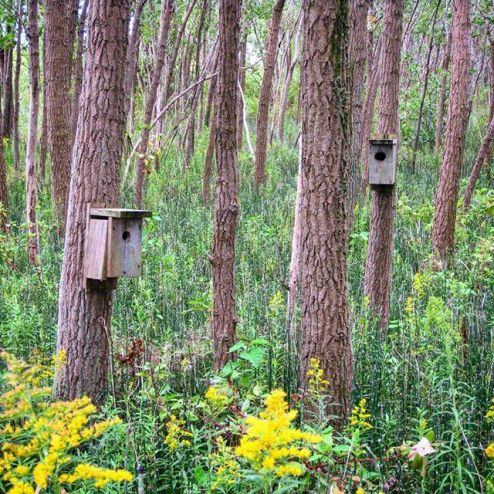 Wooden bat houses on tree trunks in Tommy Thompson Park, Toronto's Leslie Street Spit