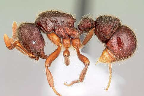 Google ant
