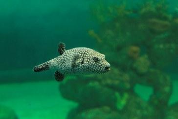 Acuario celebra el Día Mundial de los Océanos