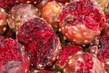 Pitahayas frutas exóticas de Sinaloa