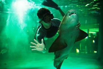 Acuario Mazatlán se consolida este 2015 como súper atractivo turístico
